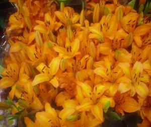 Paisagem Natural/Flor de Lis