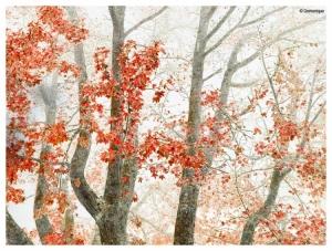 Paisagem Natural/autumn.