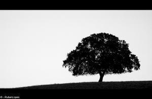 /Solitude
