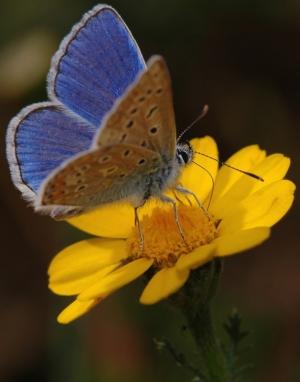 Macro/borboleta2
