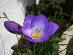 Macro/cores de primavera