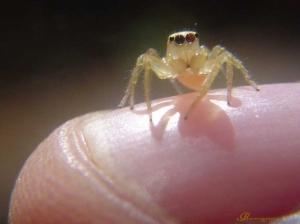 Macro/Mini Aranha