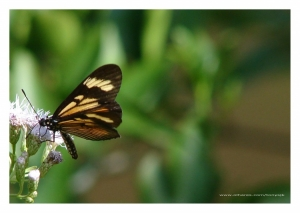 Macro/Another angle... the same butterfly