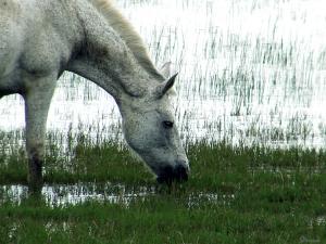 /Égua