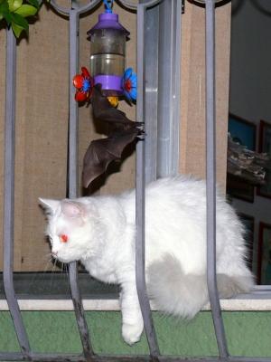 Animais/gata,morcego e bebedouro