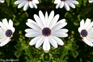Abstrato/Flores