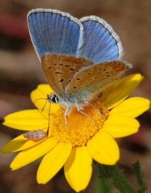 Macro/borboleta3!!!