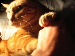 /cat II