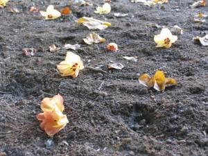 """/""""as flores de plástico não morrem..."""""""