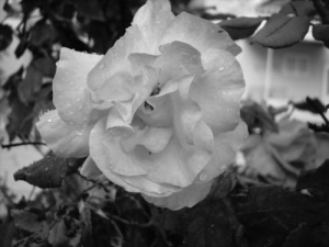 /Depois da chuva
