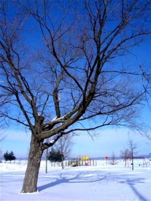 Outros/Inverno no parque