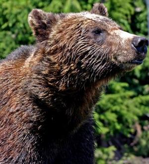 /Um urso