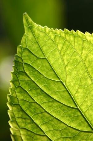 Outros/Verde verdinho