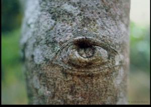 /O olho da árvore...