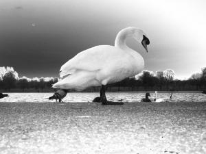 Outros/Num lago, algures...em Londres