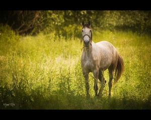 Animais/A horse with no name...