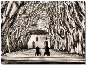 /Avenida dos Plátanos (3)...