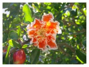 Macro/Flores do canteiro da escola