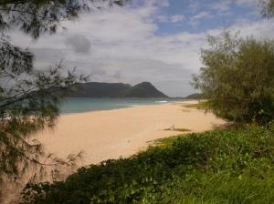 Paisagem Natural/praia da armação - SC