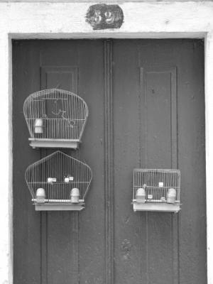 Outros/O número 52, da Rua dos Pássaros