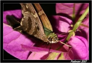Macro/O Repouso da Mariposa