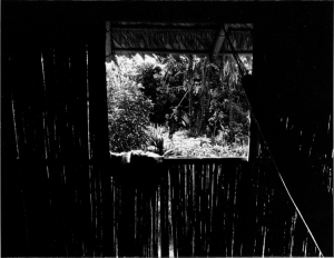 Fotojornalismo/Amazonia Window