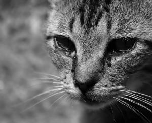 /Mr. Cat