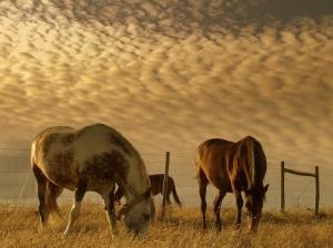 /3 cavalos...