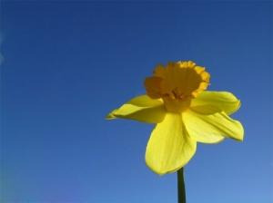 /Narciso