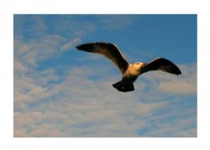 /O vôo da gaivota