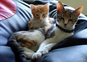 /Mimi e Pipo