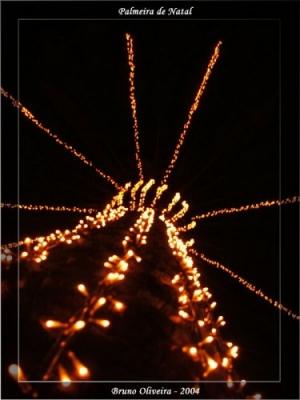 Outros/Palmeira de Natal