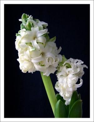 /71 - Flores em Festa