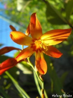Macro/Uma pequenina flor