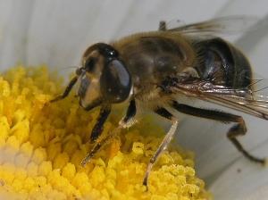 Outros/Insectos que vivem perto de nós.......