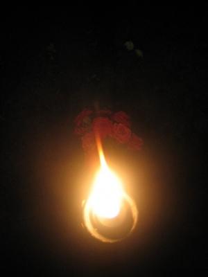 Outros/Iluminação Nocturna de Uma Roseira...