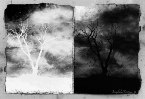 Arte Digital/Remains From The Living Trees