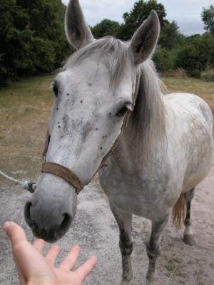 Animais/Cavalo Lindo!