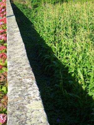 Outros/Do muro vejo os campos de milho