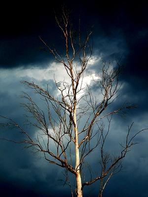 /A árvore amaldiçoada