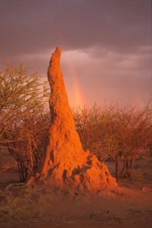 /Termiteira-Namíbia
