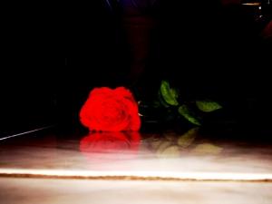 /a flor da melancolia