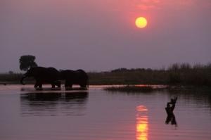 Animais/Elefantes-Botswana