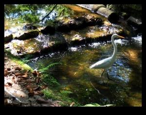 /Heron in Brook