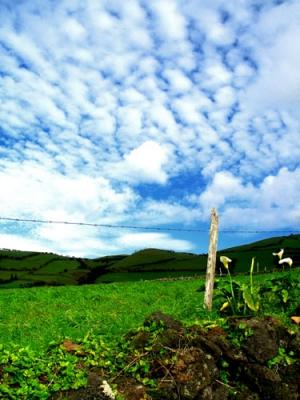 /Uma paisagem açoriana IV