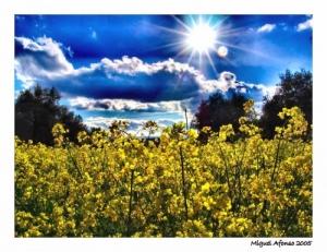 Paisagem Natural/Postal da Primavera