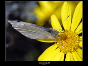 Macro/Butterfly II