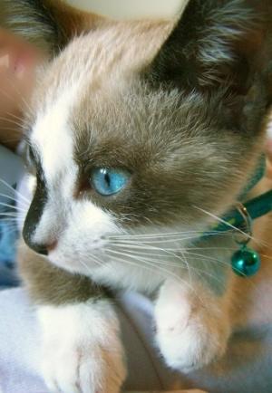 /Olho Azul