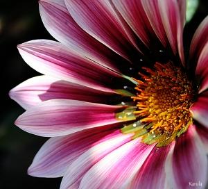 Macro/As cores da natureza...