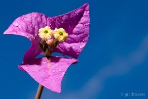 /Detalhes de uma flor
